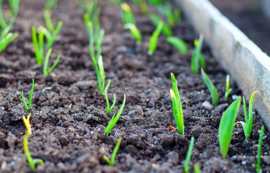 Everything You Need To Know About Preparing A Garden Bed For