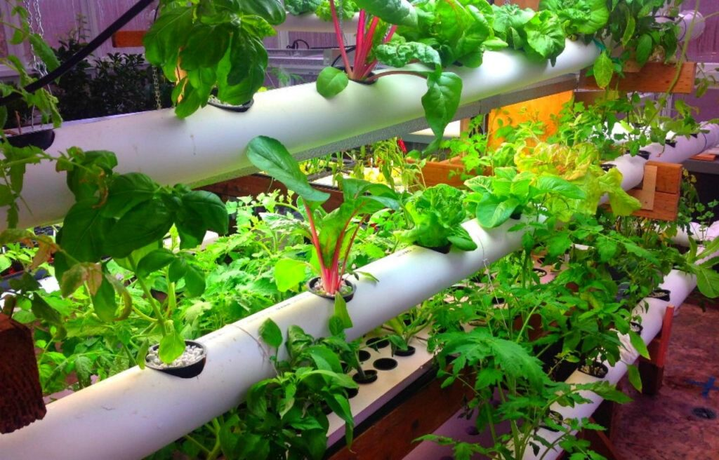 10 Best Diy Cheap Container Vegetable Gardening Ideas Anyone Can