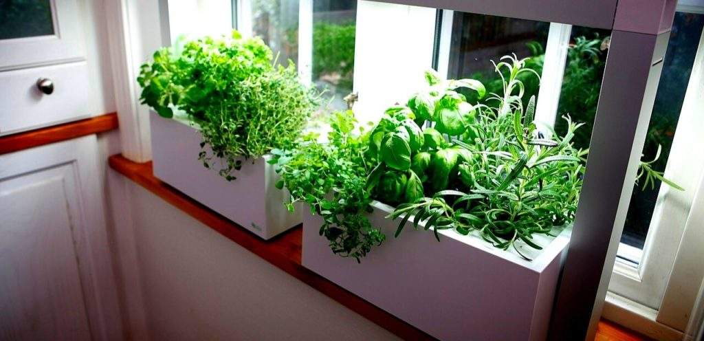 Best Vegetables To Grow Indoors Under Lights Slick Garden